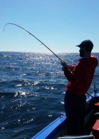 fishing-for-baitfish-in-sydney-harbour